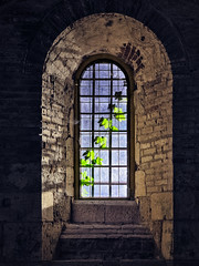 Greetings from outside. (Simon Matzinger) Tags: chiusdino toscana italy it window wall thick ruin light vine blue outside inside abbey