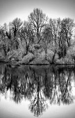 Reflection (docoverachiever) Tags: pond trees oregon riverfrontpark scenery nature reflection water slough willametteriver monochrome blackandwhite landscape salem