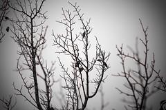 Branches (erripollo) Tags: luce valledisusa valsusa montagna m17mm em5markii em5 omd olympus legno cielo nebbia foglie alberi autunno natura monocrome wood silhouette fall tree light nature fog sky autumn