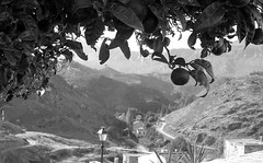Sous les orangers (adelinemoi) Tags: film filmcommunity filmisnotdead fujica fujicastx1n analog analogphotography analogvibes andalucia analogico andalousie antequera 35mm espaa viaje verano voyage blackandwhite