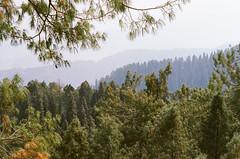 (obnimakina) Tags: film 2016 pakistan mukshpuri nathiagali ayubianationalpark khyberpakhtunkhwaprovince hills mountains forest woods green heaven conifers