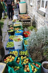 An abundance of apples (Local Food Initiative) Tags: permaculture apple day apples press pressing cider group sustainable orchard