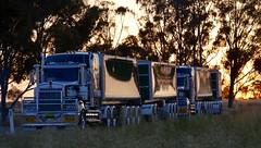 McNaughts (quarterdeck888) Tags: trucks transport semi class8 overtheroad lorry heavyhaulage cartage haulage bigrig jerilderietrucks jerilderietruckphotos nikon d7100 frosty flickr quarterdeck quarterdeckphotos roadtransport highwaytrucks australiantransport australiantrucks aussietrucks heavyvehicle express expressfreight logistics freightmanagement outbacktrucks truckies mcnaughts roadtrain roadtraintipper kenworth t909 t909kenworth tipper bogiedolly