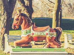 Saddle Up! (ildikoannable) Tags: vintate hourse statue riversidepark guelph carousel vintagecarousel olympus