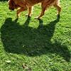 My monster... #goldenretriever #vodka #everydaygrace #adogsdailylife #dogpark