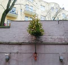 joulupuuparkki (neppanen) Tags: sampen helsinki suomi finland discounterintelligence skatta katajanokka helsinginkilometritehdas piv84 reitti84 pivno84 reittino84 joulukuusi puu sispiha piha