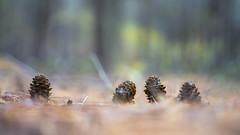 Lorkenappels . (look to see) Tags: lorkenappels bokeh pastel meeuwen belgium fall herfst vivitar55mmmacrof28 2016