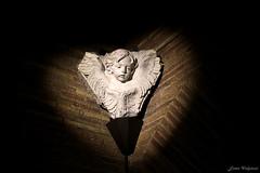 1396 (Ester Vulpiani Photographer) Tags: foro romano palatino roman forum palatine hill roma rome ancient art history arte storia rabbit colosseum santa maria antiqua angel ruins templum tempio venere bird fauna colosseo walking passeggiata sunset sunny day canon eos 550d
