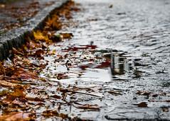 Puddle (johanbe) Tags: puddle rain leaf leaves wet kunglv vstkusten vstragatan autumn november sweden regn pl vatten hst lv grtt