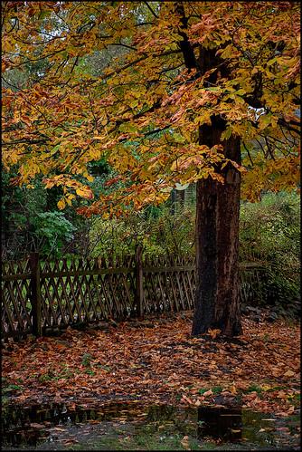 Autumn Impressions II |  Schleswig