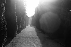a place for the dead (gato-gato-gato) Tags: 35mm asph ch hp5 iso400 ilford leica leicamp leicasummiluxm35mmf14 mp mechanicalperfection messsucher schweiz strasse street streetphotographer streetphotography streettogs suisse summilux svizzera switzerland wetzlar zueri zuerich zurigo zrich analog analogphotography aspherical believeinfilm black classic film filmisnotdead filmphotography flickr gatogatogato gatogatogatoch homedeveloped manual rangefinder streetphoto streetpic tobiasgaulkech white wwwgatogatogatoch zrich manualfocus manuellerfokus manualmode schwarz weiss bw blanco negro monochrom monochrome blanc noir strase onthestreets mensch person human pedestrian fussgnger fusgnger passant zurich
