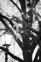 Unter der Laterne (glaserei) Tags: laterne licht baum schwarzweis bw