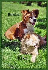 Mascotas Bimba y Kiko, dos inseparables (alma-81) Tags: kiko perros mascotas bimba grulleros