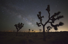 Milky Way - Joshua Tree National Park, California (Will Shieh) Tags: california park ca travel trees plants usa mountain tree nature night canon dark palms stars landscape dawn star landscapes long exposure peace nightscape desert joshua outdoor conservation growth national will environment 5d constellation markii milkyway shieh 14mm twentynine samyang rokinon lightvision fe14mc