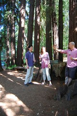 (mschout) Tags: california trees usa winery napa redwoods reverie