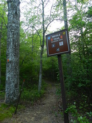 The Meisle Trail (Christine_Ray) Tags: new pine forest state reserve national jersey pinelands barrens belleplain belleplaincapemayandparvin
