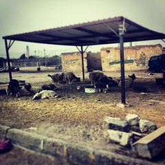 Butchers, Basra