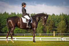 finished (D.Reichardt) Tags: horse sport germany europe unity riding rider dressage dressur consistent