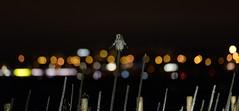 Jorduggla, Uppsala, Uppland, November 2012 (Gavia_Stellata) Tags: birds sweden aves sverige fåglar shortearedowl asioflammeus jorduggla