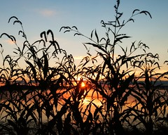 HOA Sunrise (DASEye) Tags: sunrise dawn weeds nikon dayseye davidadamson
