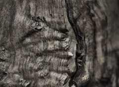 Wood (Sandy Sharples) Tags: wood blackandwhite bw detail macro tree nature lines canon bark trunk