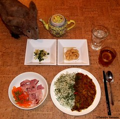 Seara (sea rabbit). Photo by Dr. Takeshi Yamada. 20120307 026. Japanese Beef Curry Rice. Ham, Carrot & Peads Salad. Pickled Bok Choy. Sweet Butter Beans. Lemon Tea. Water. (diningwithsearabbits01) Tags: startrek ny newyork sexy celebrity art hat fashion animal brooklyn painting asian coneyisland japanese star costume tv google king artist dragon god cosplay manhattan wildlife famous gothic goth performance pop taxidermy cnn tuxedo bikini tophat unitednations playboy entertainer takeshi samurai genius mermaid amc mardigras salvadordali unicorn billclinton billgates aol vangogh curiosities sideshow jeffkoons globalwarming takashimurakami pablopicasso steampunk yamada damienhirst cryptozoology freakshow barackobama seara immortalized takeshiyamada museumofworldwonders roguetaxidermy searabbit ladygaga climategate minnesotaassociationofroguetaxidermists  spockfood