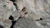 No monkey business (DameBoudicca) Tags: japan zoo tokyo ueno 日本 nippon 東京 上野 japon giappone tiergarten nihon tokio 動物園 snowmonkey japón uenozoo japanesemacaque 猿 djurpark giardinozoologico macacafuscata parczoologique ニホンザル 恩賜上野動物園 japanmakak macaquejaponais jardínzoológico onshiuenodōbutsuen macacojaponés macacogiapponese japanskmakak macacodecararoja