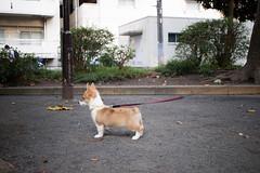 IMG_2118.jpg ( Yukio Endo) Tags: shelly