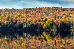Fall Reflection (PIERRE LECLERC PHOTO) Tags: fall autumn season colors colorful trees forest maple nature wilderness reflection lake water still calm lakebouchard lamauricie nationalpark quebec canada shore landscape travel pierreleclercphotography