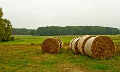 Strohballen im Moor (gutlaunefotos ) Tags: stroh herbst wiese moor strohballen