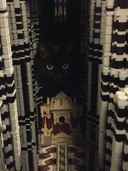 it's a cat house not a cathedral