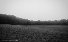 On a moody morning in october. (andreasheinrich) Tags: landscape meadow forests trees morning october blackandwhite blackandwhitephotos moody foggy cold germany badenwrttemberg neckarsulm dahenfeld deutschland landschaft wiese wlder bume morgen schwarzweis dster neblig kalt nikond7000