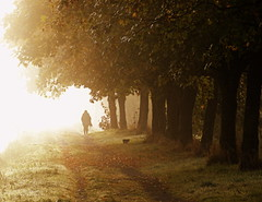 Balade matinale  sur le chemin de halage (Eric DOLLET - Trs peu prsent) Tags: ericdollet bretagne matin brume lumire halage