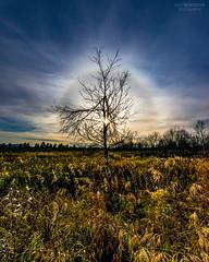 Solar halo (AngryTheInch42) Tags: halo solarhalo weather kiruna sweden arctic subarctic arcticcircle sky landscape tree