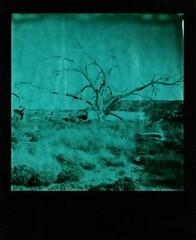 garita (a perhaps hand) Tags: polaroidcamera polaroid600 instantcamera theimpossibleproject instantfilm duochromefilm landscape deadtree desert rural village newmexico