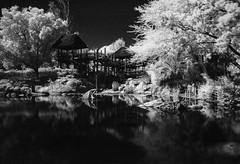 Safari Park Pond (LXG_Photos) Tags: 6x9 analog monochrome sfx singhrayir wap film safaripark infrared ir