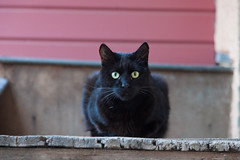 (starlyte33) Tags: portrait cat canoneos5dmarkii couleurs rue