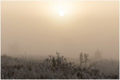 take a picture (HP019861) (Hetwie) Tags: ijs ice strabrechtseheide frozen frost natuur nature rijp ochtend kou nachtvorst fotograferen zonsopkomst heather heide sunrise strabrecht vorst lierop noordbrabant nederland