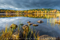 Harlanda (James Whitlock Photography) Tags: sweden gothenburg harlanda lake reservoir rock tree golden autumn leaves leaf grass moody dark skies reflection nikon d810 rain storm winter gitzo lee filters