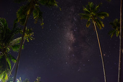 Milky Way Palms (free3yourmind) Tags: milky way palms bohol island philippines sky night