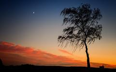Abendstimmung in der Eifel bei Mechernich (videamus) Tags: abenstimmung mechernich eifel deutschland herbst november stimmung vergnglichkeit berg nationalpark nikon d600 bike baum einsam mond halbmond birke evening himmel mondsichel schein wolken abendrot abendrte silhouette cloud wetter