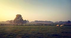 Flemish Landscape (richard.scott1952) Tags: leicasummicron35mmf20iv air autumn cloud clouds cold color colorful colour colourful dawn fog mist landscape monochromatic outdoor pretty pristine farm sky sun sunshine sunrise travel trip tree trees leica m240