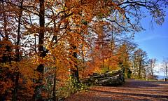De jaune et d'ocre (Diegojack) Tags: paysages automne feuillage couleurs campagne vaud lemont