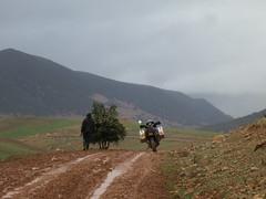 Donkey overtakes motorcycle