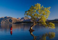 Ananya and that Wanaka Tree (TheDailyNathan) Tags: ananyaray fallcolors instagram instagrammer lake lakewanaka lonetree newzealand nz otago reddress reflection thatwanakatree tree wanaka willow