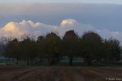 boschetto (gaddi_luca) Tags: allalba boschetto autunno novembre nuvole campagna barco nikon passion