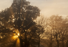 Sun setting in the trees (kevwilliams69) Tags: sun sunset tree trees evening mist rays