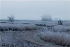 Road (HP019827) (Hetwie) Tags: natuur frost rijp nature heide kou ijs road nachtvorst zonsopkomst weg ochtend sunrise strabrecht frozen pad strabrechtseheide ice vorst heather lierop noordbrabant nederland