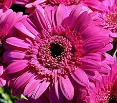 Meine Kamera kann auch bunt...! :-) (GelsenBuer) Tags: plant flower nature petals natur pflanze blumen colored blume bltter coloured farbig bunt