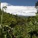 La fitta vegetazione dopo Portovelo